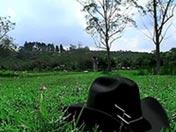 Beau cowboy sodomisé dans une plaine