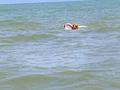 Un guardone filma una studentessa su una spiaggia naturista